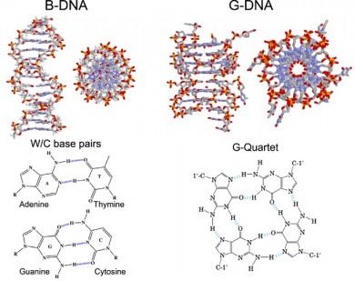 DNA-5 cuadruple