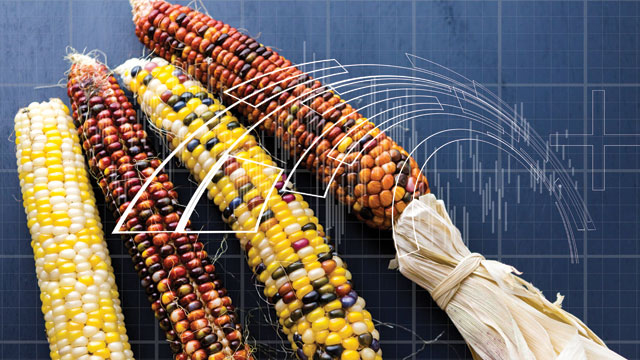Transposable elements in corn