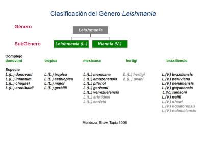 Leishmania Clasificación