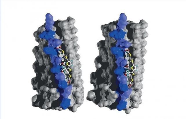 377- Fig-Ventana-Molecular