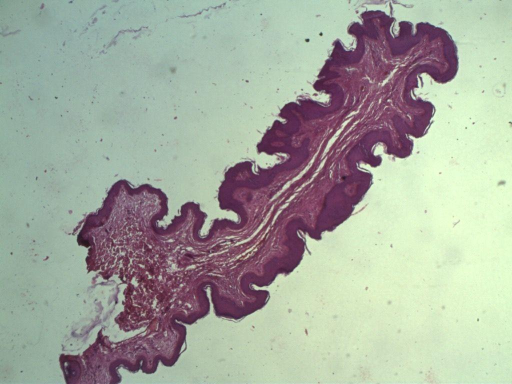 edicion387-microscopio-01