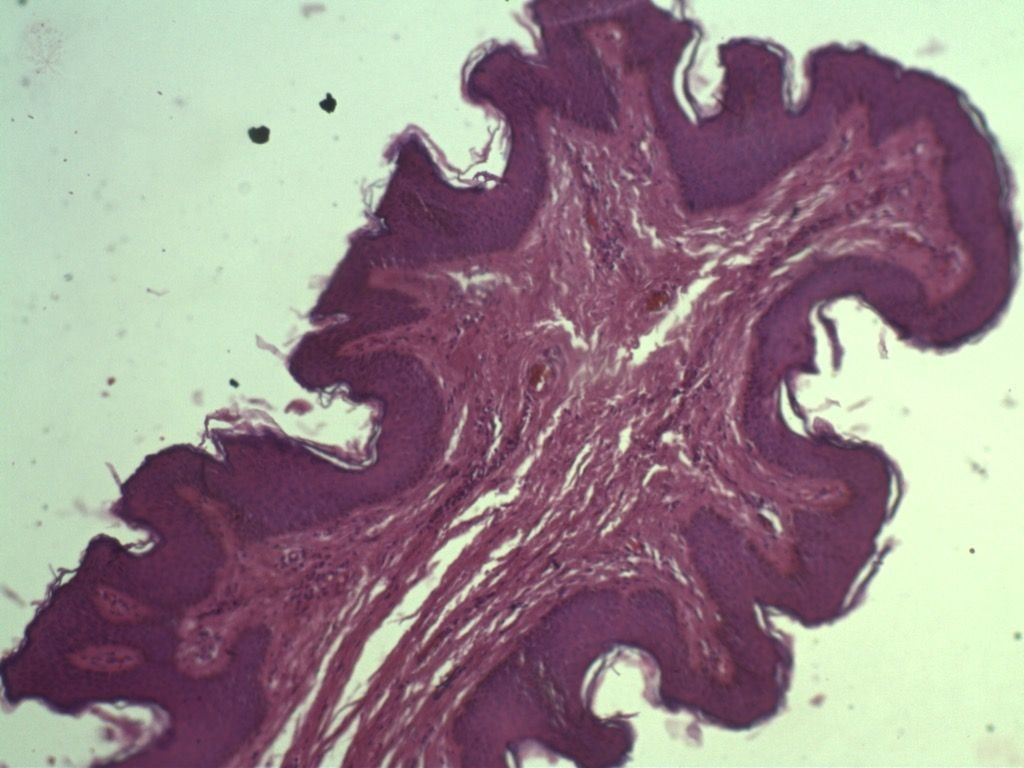 edicion387-microscopio-02