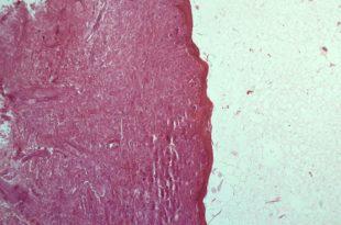 ed399-microscopio2-01