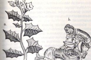 aztecas-ed401